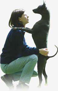 Xoloitzcuintle (Mexican Hairless Dog) Kennel Tecuani